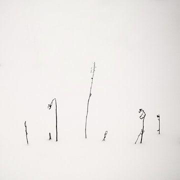Kalligrafie in sneeuw van Lena Weisbek
