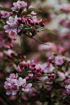 Boomtakken vol roze bloesem | Arnhem, Holland van Trix Leeflang