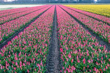 Tulpenveld  van Richard Steenvoorden