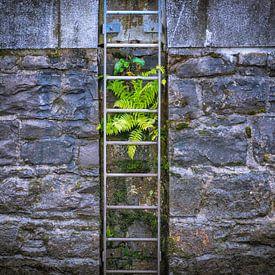 Varen groeiend op een kade muur van Pascal Raymond Dorland