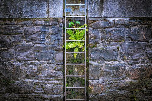 Varen groeiend op een kade muur van