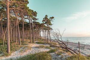 Strand aan de Oostzee van Steffen Gierok