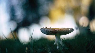 Colorful mushroom sur Milou Oomens