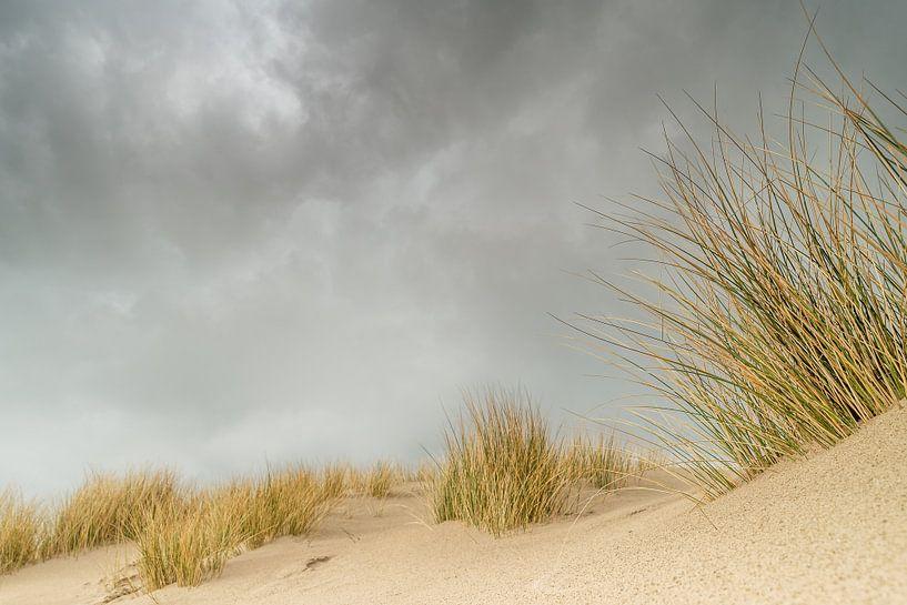 Donkere lucht boven de duinen van Gonnie van de Schans