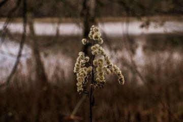 Pflanze von Oguz Özdemir