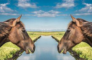 Paardenkoppen met een sloot er tussen