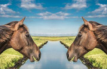 Paardenkoppen met een sloot er tussen von Harrie Muis