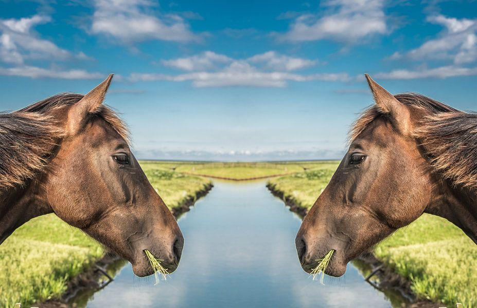 Paardenkoppen met een sloot er tussen van Harrie Muis