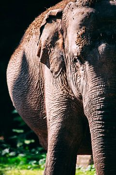 olifant kleur van Daphne Brouwer