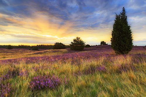 Sonnenaufgang in der Lüneburger Heide van Daniela Beyer