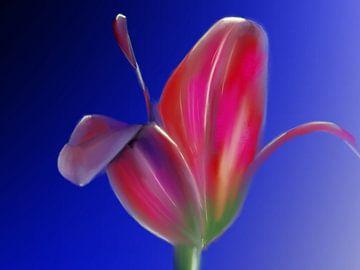 Tulp uit Amsterdam van Blckwork ..
