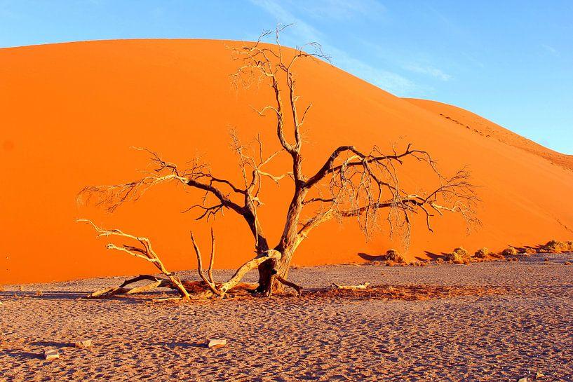 Zandduinen van Inge Hogenbijl
