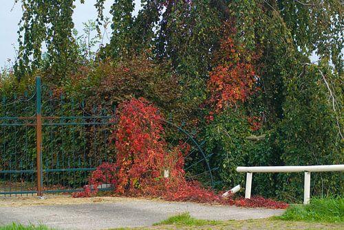 Het begin van de herfst van