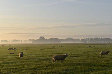 Schafe von Johanna Varner