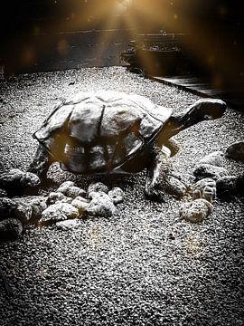 Grote Caribbean landschildpad van Renee Alexandra Serlier