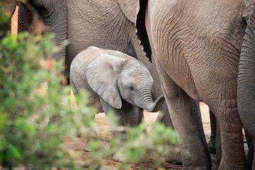Baby olifant sur Trudy van der Werf