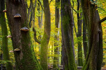 Dansende bomen in het Speulderbos van Sander Groenendijk
