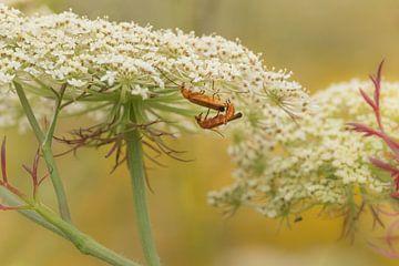Weekschildkevers van Moetwil en van Dijk - Fotografie