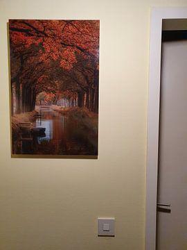 Kundenfoto: Bontebok, Friesland von Marcel Kieffer