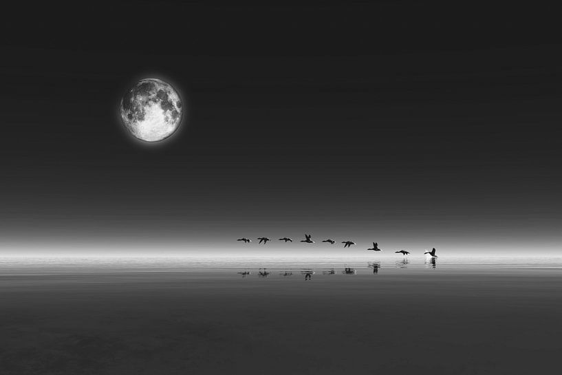 Dierenrijk – Ganzen die bij volle maan opstijgen van Jan Keteleer