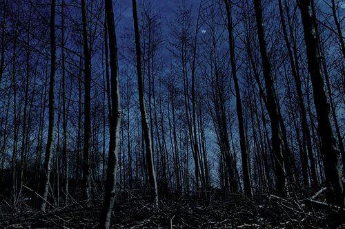 night blue von Yvonne Blokland