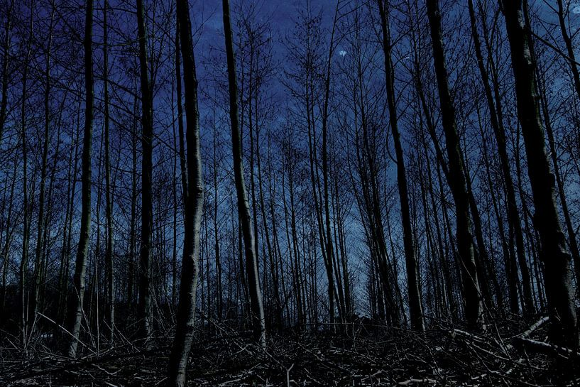 nachtblauw van Yvonne Blokland