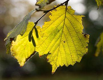 Het blad van een boom sur Roosmarijn Jongstra