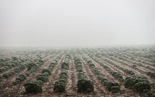 """""""Boerenkool"""" in the mist - Bergen op Zoom van Maurice Weststrate"""