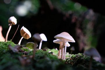 Paddestoelen in het bos van Ingrid Meuleman