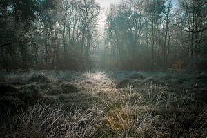 Veluwse wandeling van Patrick  van Dasler