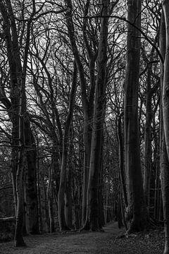 Entlang der hohen Bäume von Stefan Verheij