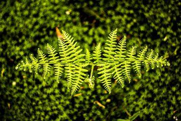 plant sur Bjorn Brekelmans