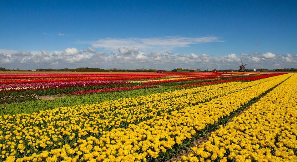 Bollenveld in Noord-Holland van Dirk Jan Kralt