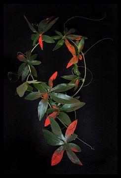 Abstract bladeren in rood en groen van Marianne van der Zee