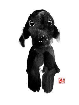 cute dog sur philippe imbert