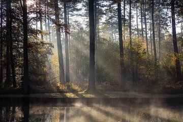 Hefst reflectie van Bart Ceuppens