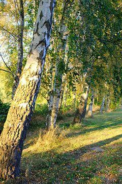 In de avondzon van Ostsee Bilder