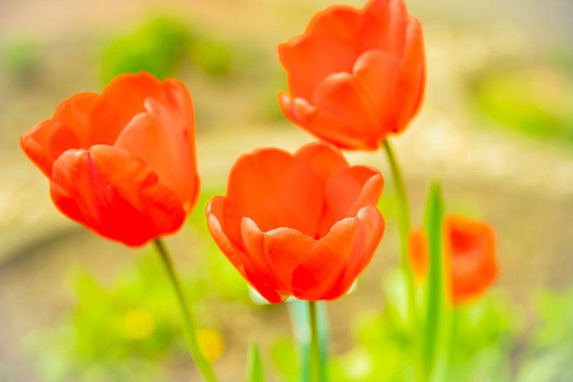 Red Flowers van Nicolas Lebeau
