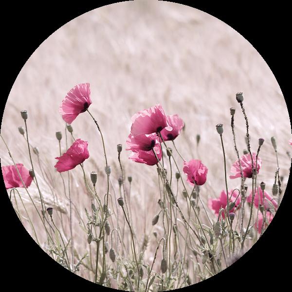 Poppy Field in Pastel Pink van Tanja Riedel