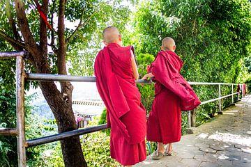 Two young monks von Martin Smit