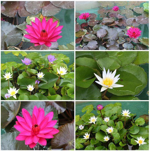 Collage Lotusbloemen van Inge Hogenbijl