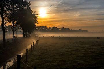 Schapen in de mist von Moetwil en van Dijk - Fotografie
