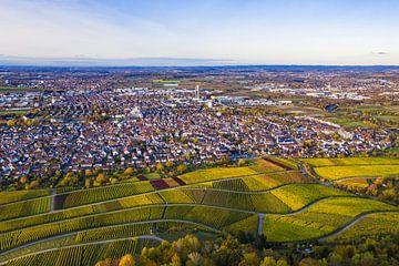 Weinbau in  Fellbach von Werner Dieterich