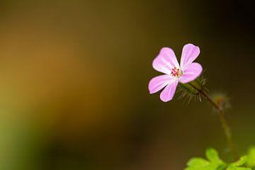 Roze bloem - Isolatie van Rouzbeh Tahmassian