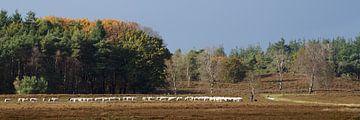 Schaapherder met kudde op de heide. von Gert van Santen