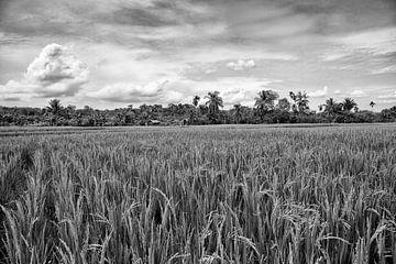 Indonesië rijstvelden van Jan Pel