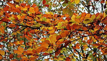 Autumn Colors ( herfstkleuren ) sur Yvonne Blokland