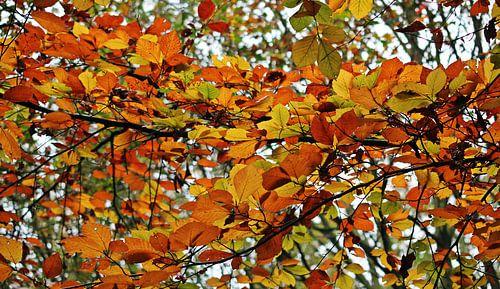 Autumn Colors ( herfstkleuren )