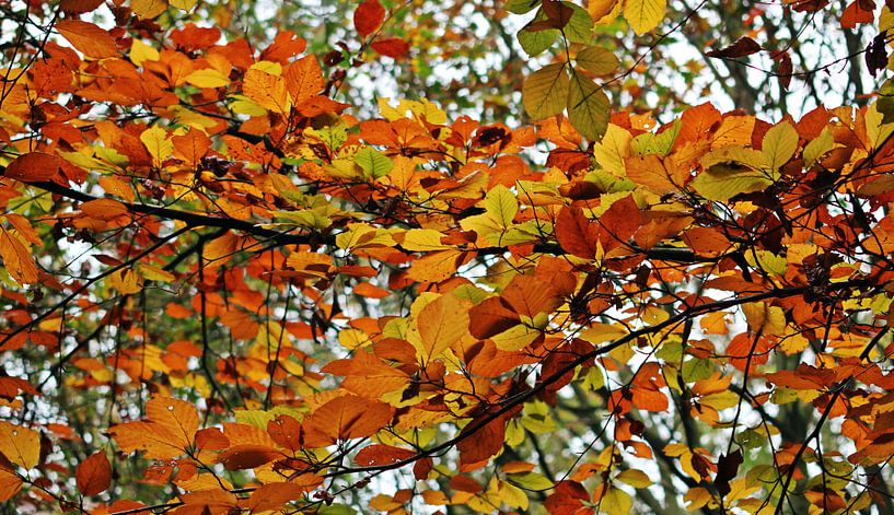 Autumn Colors ( herfstkleuren ) van Yvonne Blokland