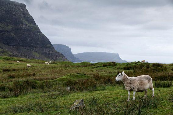 Landschap in Uig Highland